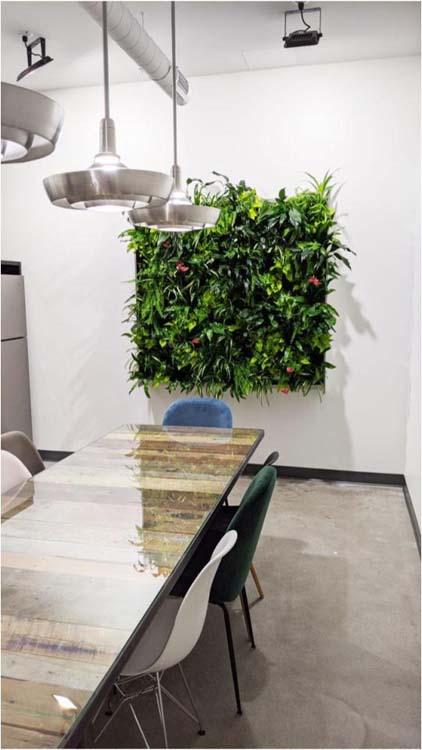 mur vegetal et jardin vertical rafraichissant