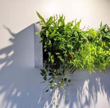 murs vegetaux interieurs comme idee decorative
